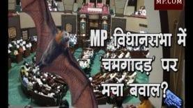 MP विधानसभा में 'चमगादड़' पर मचा बवाल?